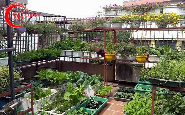 vườn rau ban công 4