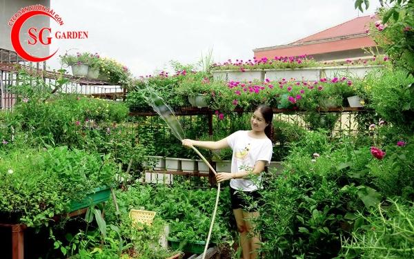 vườn rau sân thượng 12