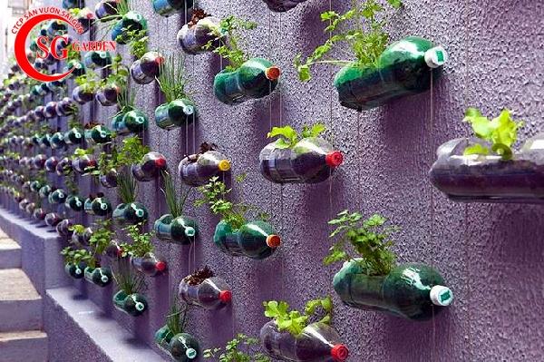 vườn rau sân thượng 17