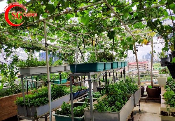 vườn rau sân thượng 18