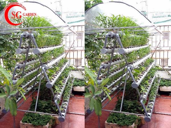 vườn rau sân thượng 31