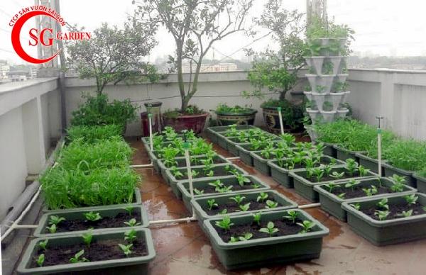 vườn rau sân thượng 6