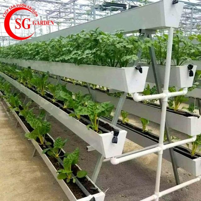 thiết kế vườn rau thủy canh sân thượng 9