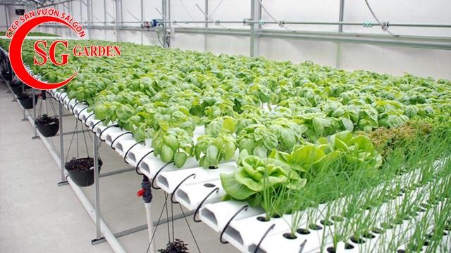 thiết kế vườn rau thủy canh sân thượng 11