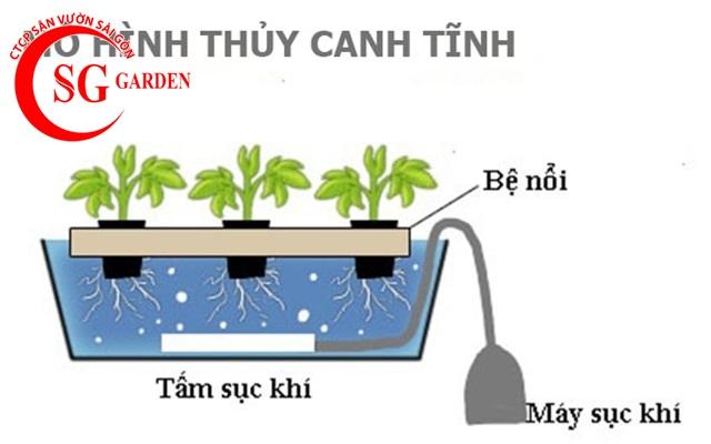 thiết kế vườn rau thủy canh sân thượng 5