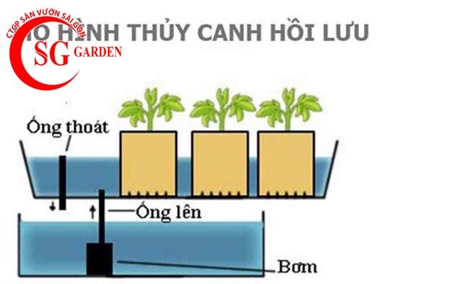 thiết kế vườn rau thủy canh sân thượng 4