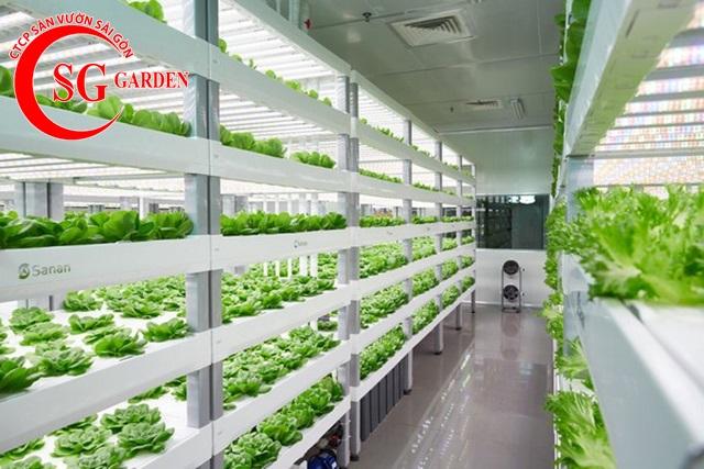 thiết kế vườn rau thủy canh sân thượng 8