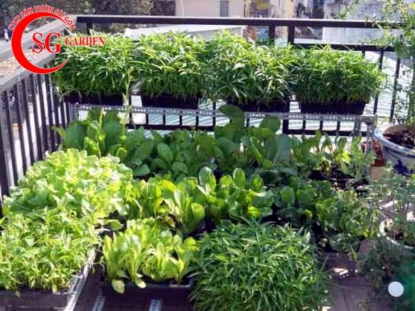 vườn rau nhà phố 3