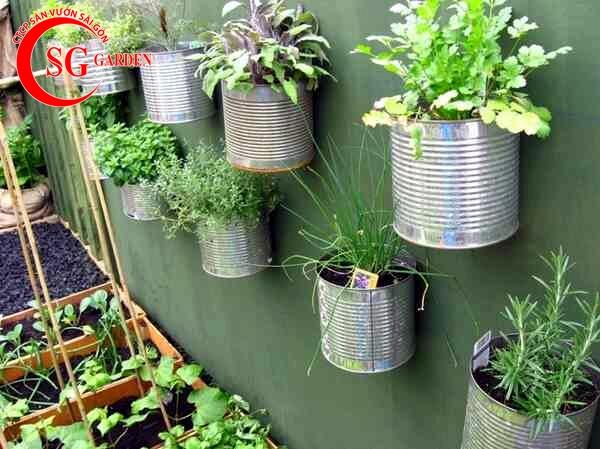 vườn rau nhà phố 5