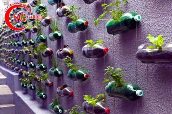 vườn rau nhà phố 10